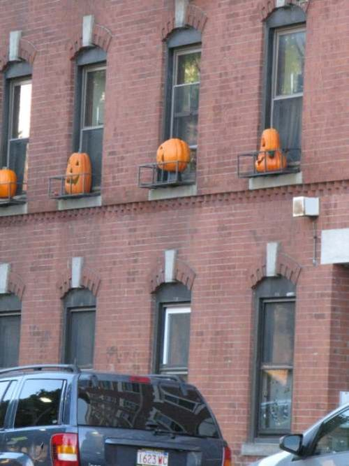 Northendpumkinsinwindows