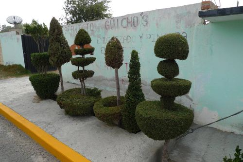 Jsculpturedshrubs