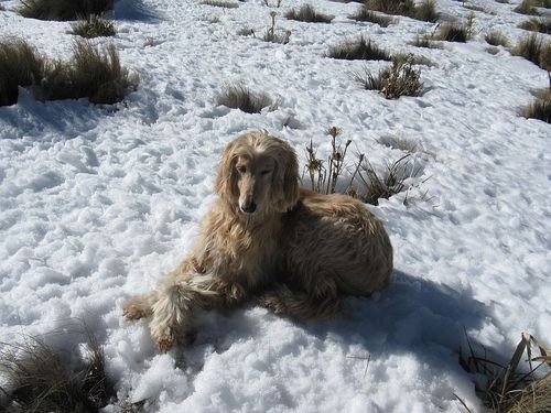 Giaco posing in the snow