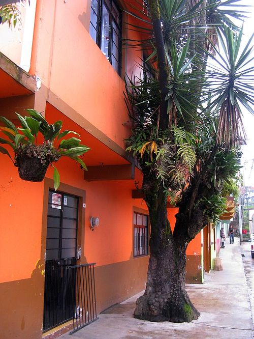 Ixhuacan orange house spiky tree orchids etc