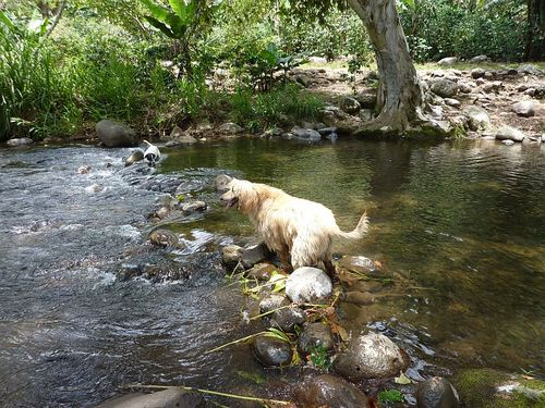 Dogs giaco and cosi in water