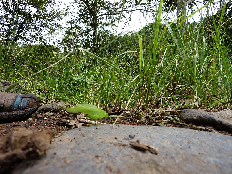 Walk july 26 green insect on rock