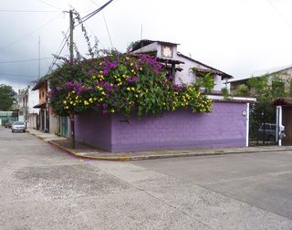 House with purple, yellow flores