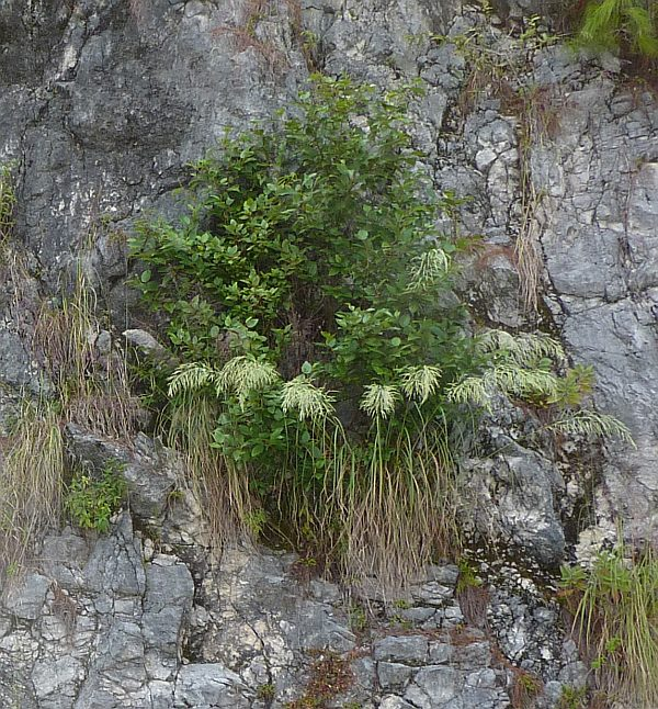 Plants growing out of rock face