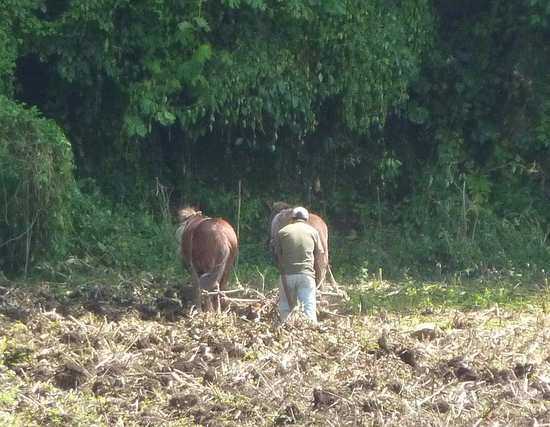 Ploughing w horses nr ixhuacan
