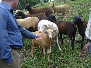 Farm tour 9 goats