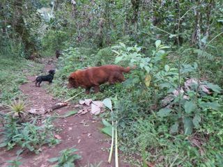 Rita and daisy on path in woods